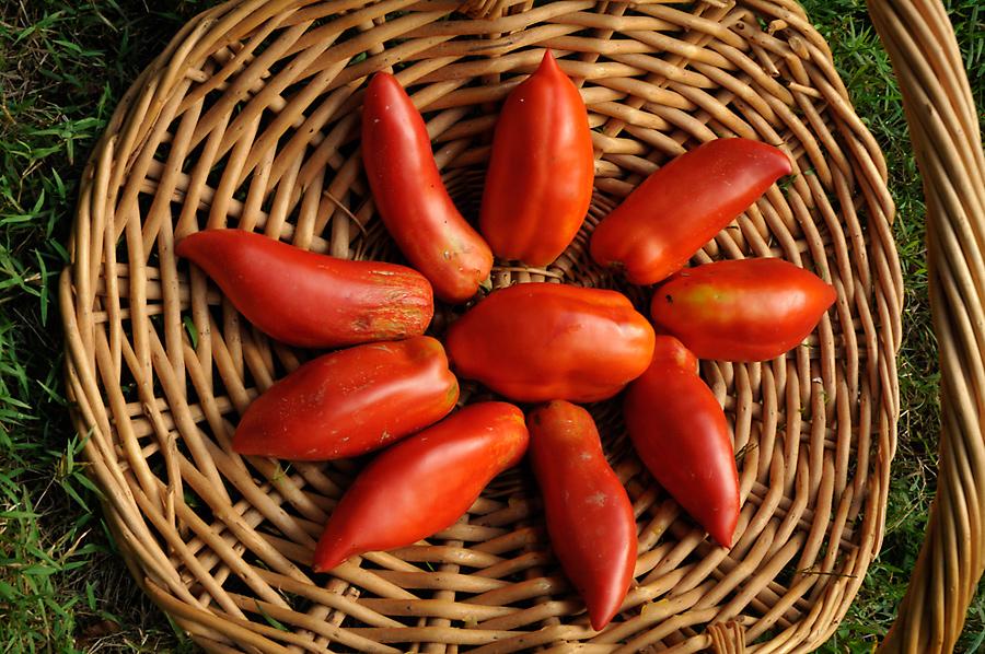 Bilera Tomato